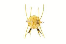 Crab Flexo Olive