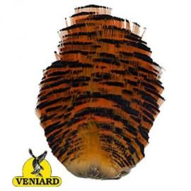 Golden Pheasant whole tippet collar